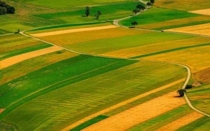 Кто и как может покупать земли сельскохозяйственного предназначения?