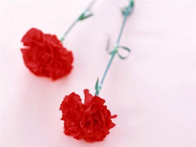 Какие цветы покупают на похороны