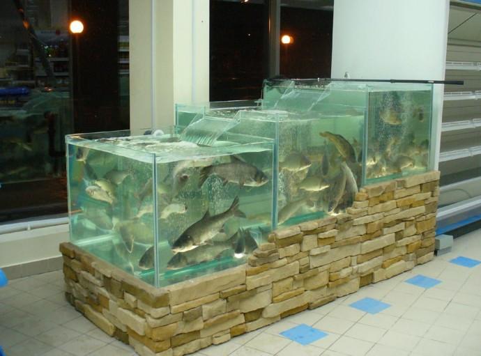 Промышленные аквариумы: что это? | Журнал