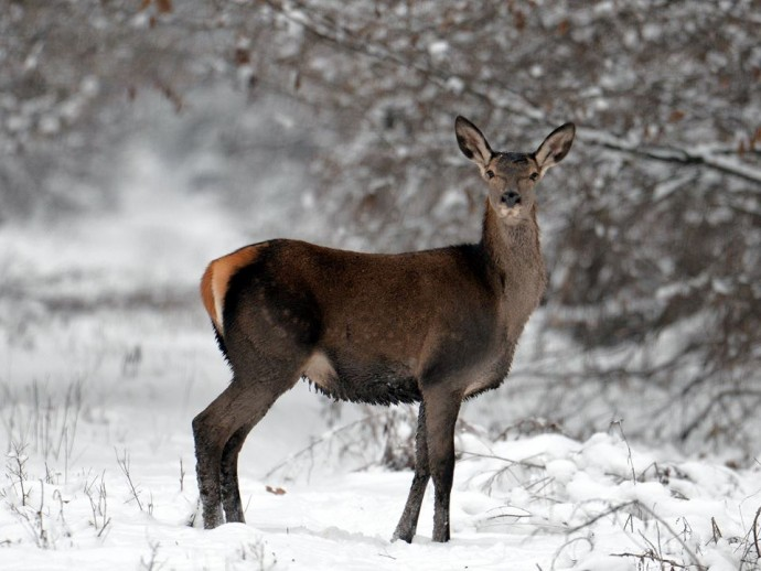 У зоні ЧАЕС виявили унікальних тварин (Фото)
