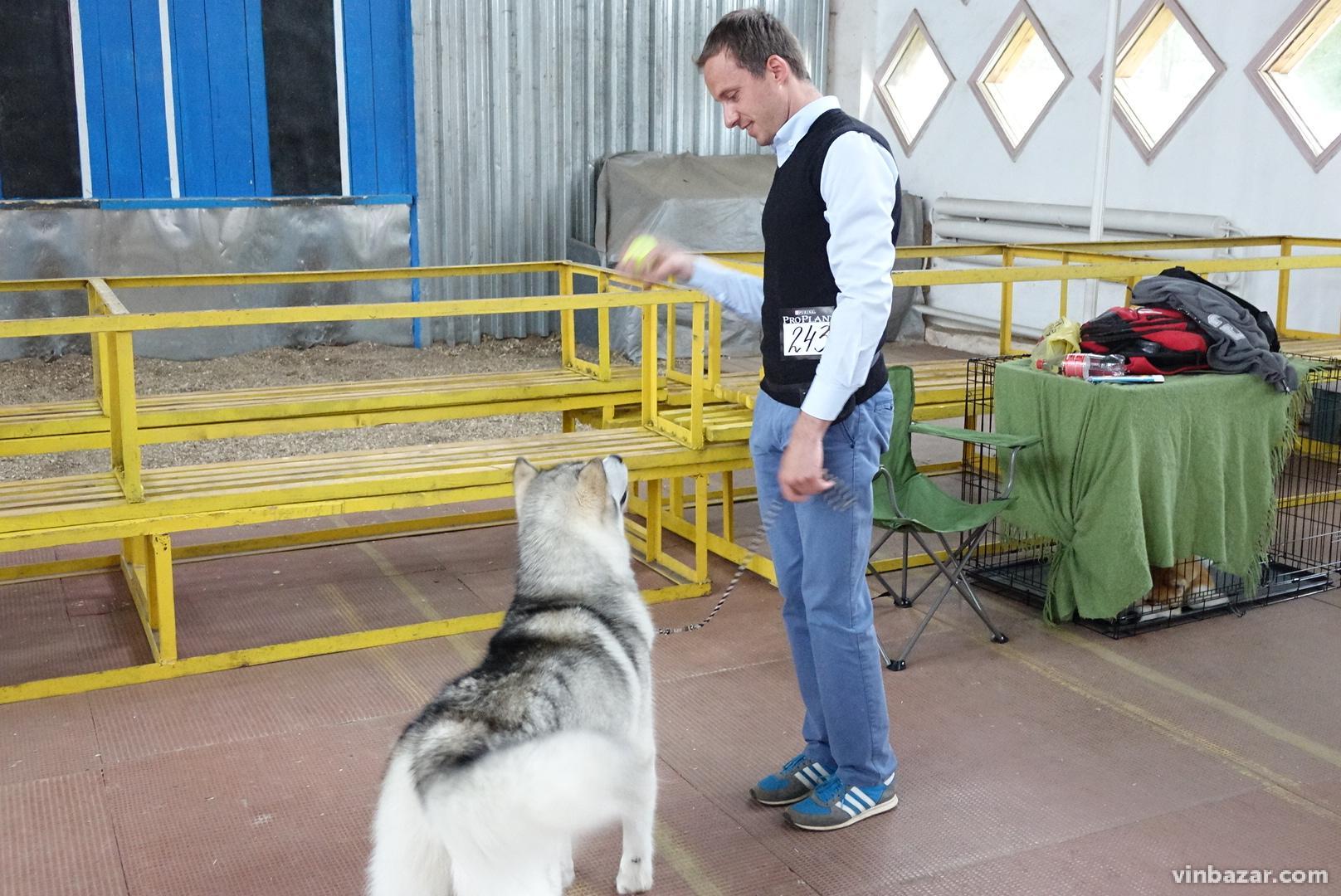 Від найменших до велетнів: у Вінниці влаштували виставку собак (Фото)