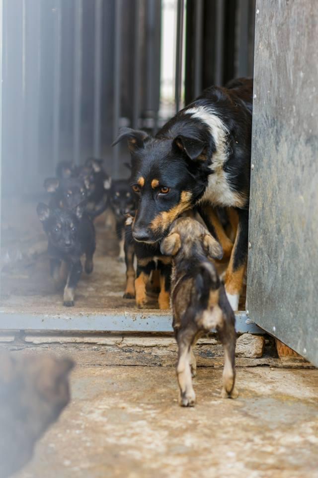 Флешмоб від мера: у Вінниці привертають увагу до проблеми безпритульних тварин (Фото)