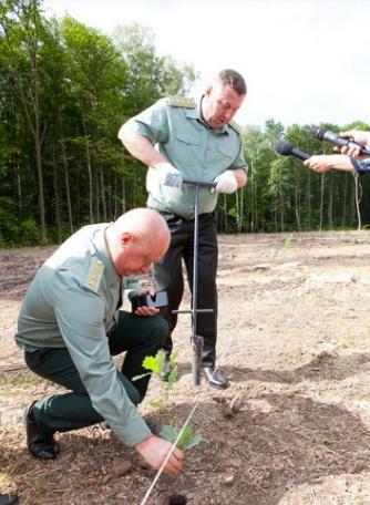 На Вінниччині лісівники виростили 250 тисяч саджанців дерев