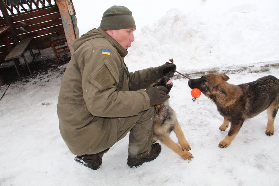 У Калинівському полку Нацгвардії поповнення службових собак (Фото)