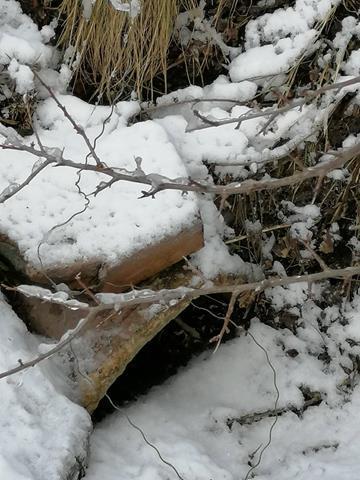 У лісах на Вінниччині виявили заборонені знаряддя добування тварин (Фото)