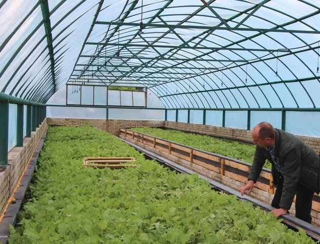 На Вінниччині фермер вирощує середземноморських равликів (Фото)