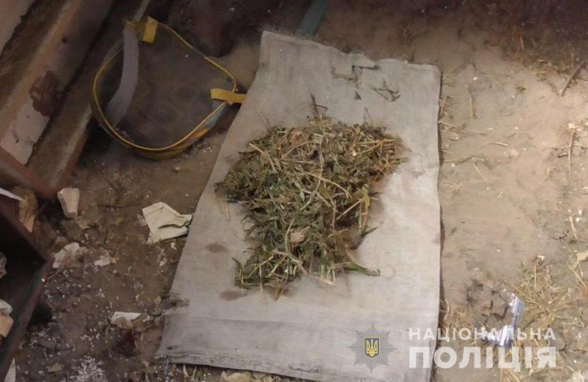 Житель Калинівського району виростив 365 кущів конопель на власному городі (Фото)