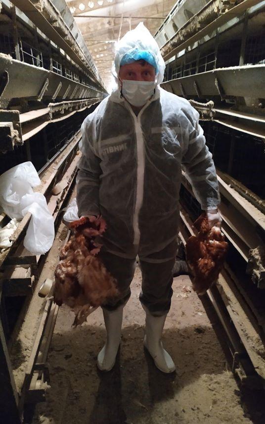 Через спалах пташиного грипу на Вінниччині знищили 22,5 тисячі птахів (Фото)