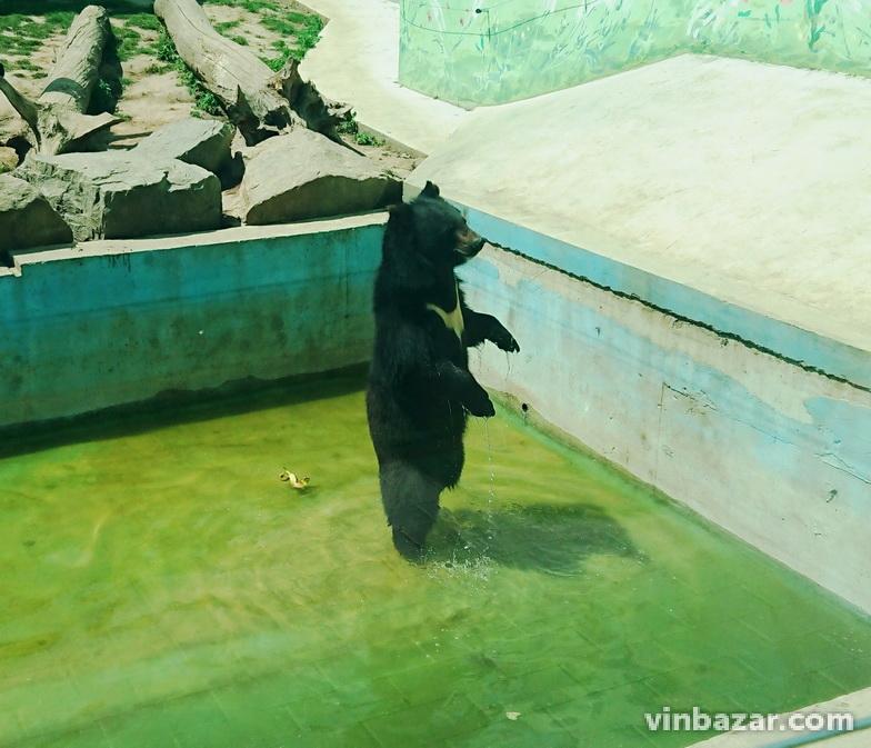 Ведмежа, яке народилося у зоопарку Вінниці, планують відправити до Угорщини (Фото)