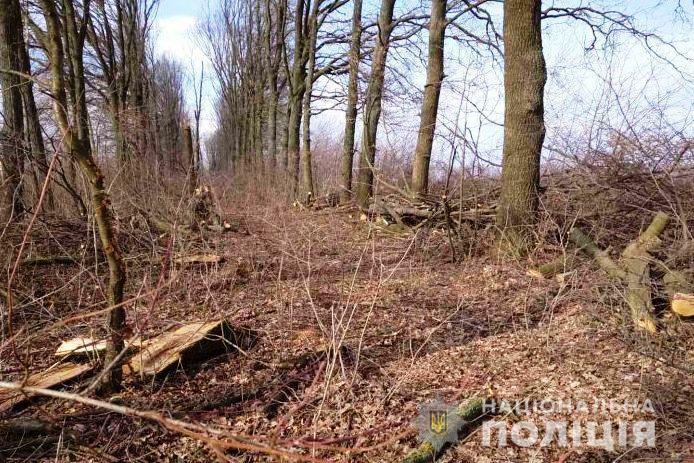 """На Вінниччині судитимуть """"чорних лісорубів"""", які зрубили дерев на 3 мільйони гривень (Фото+Відео)"""