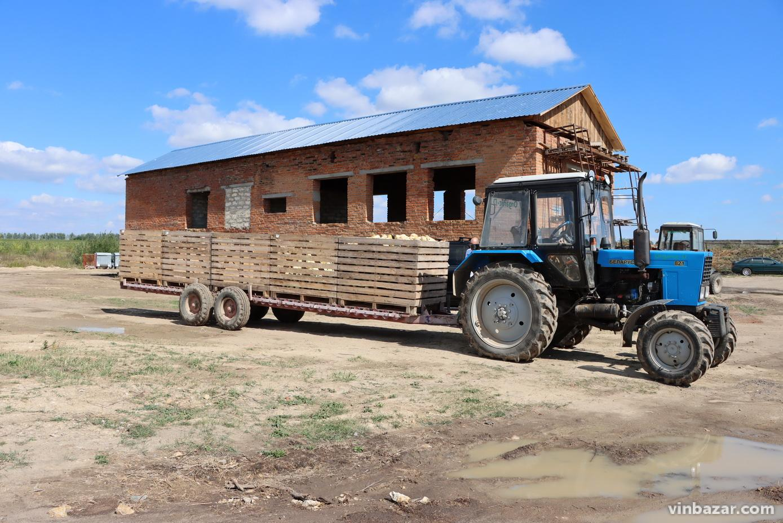 Гарбузи, вирощені на Вінниччини, експортуватимуть до Європи(Фото)