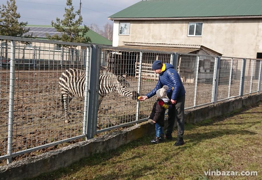У зоопарку Вінниці загинула зебра (Фото)
