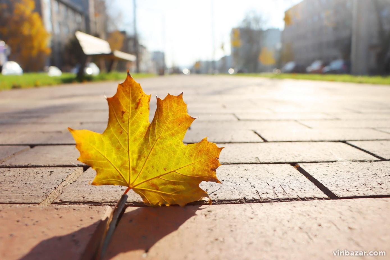 Закінчується осінь: Вінниця в теплих листопадових тонах (Фото)
