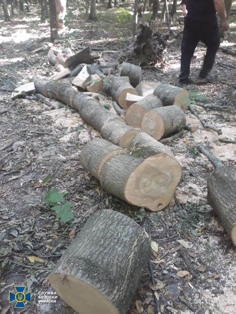У Вінницькій області затримали лісника, який незаконно зрізав дерев на півмільйона гривень