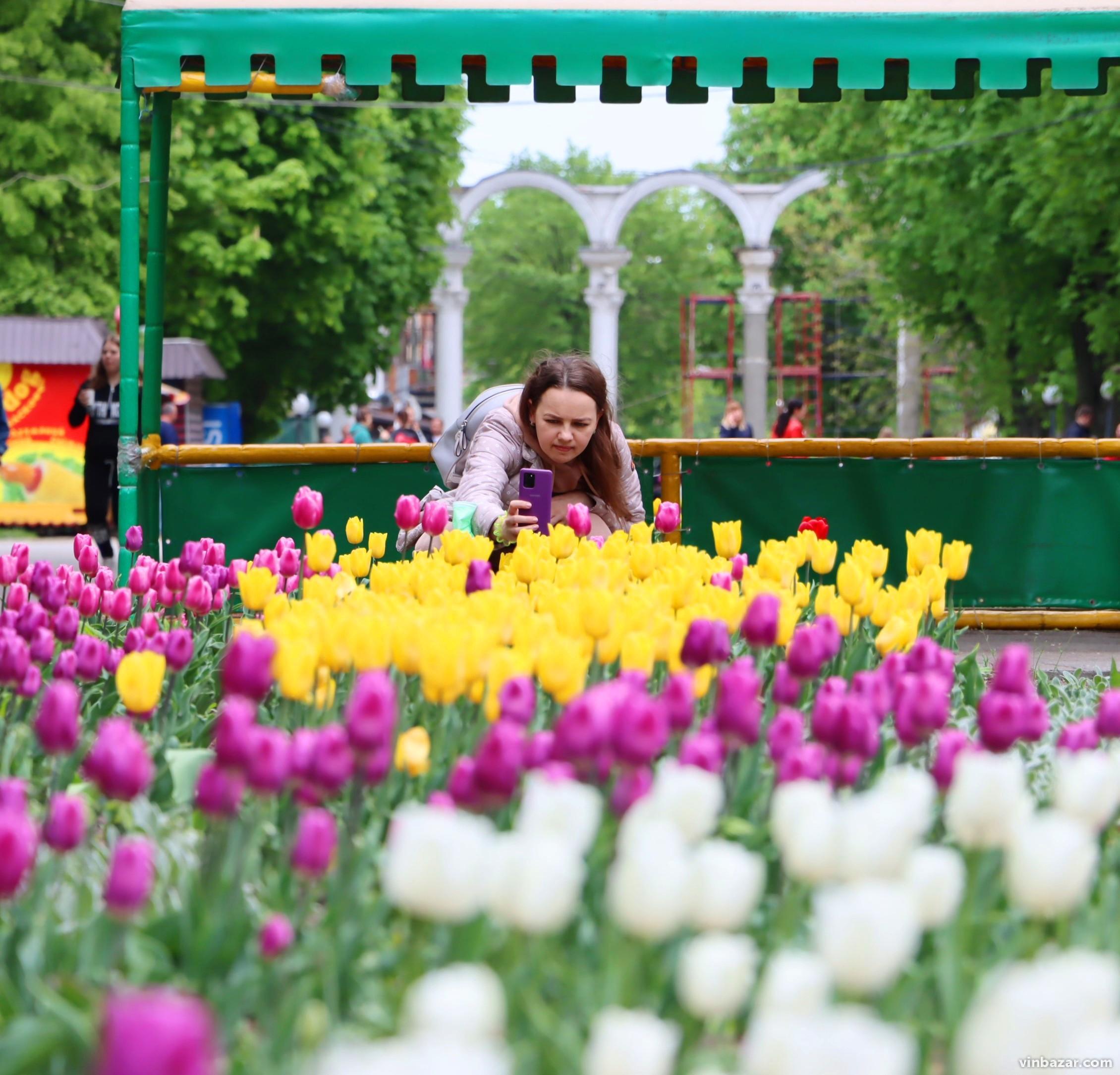 Вінниця у квітах: місто заполонив цвіт сакур, магнолій та тюльпанів (Фото)