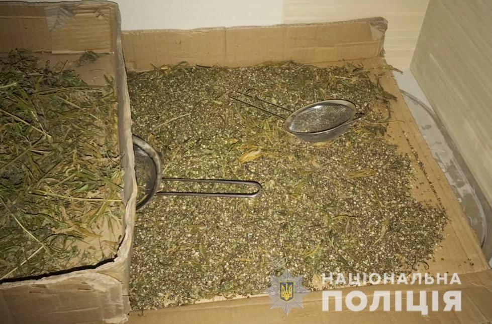 У Хмільнику випадково виявили плантацію коноплі