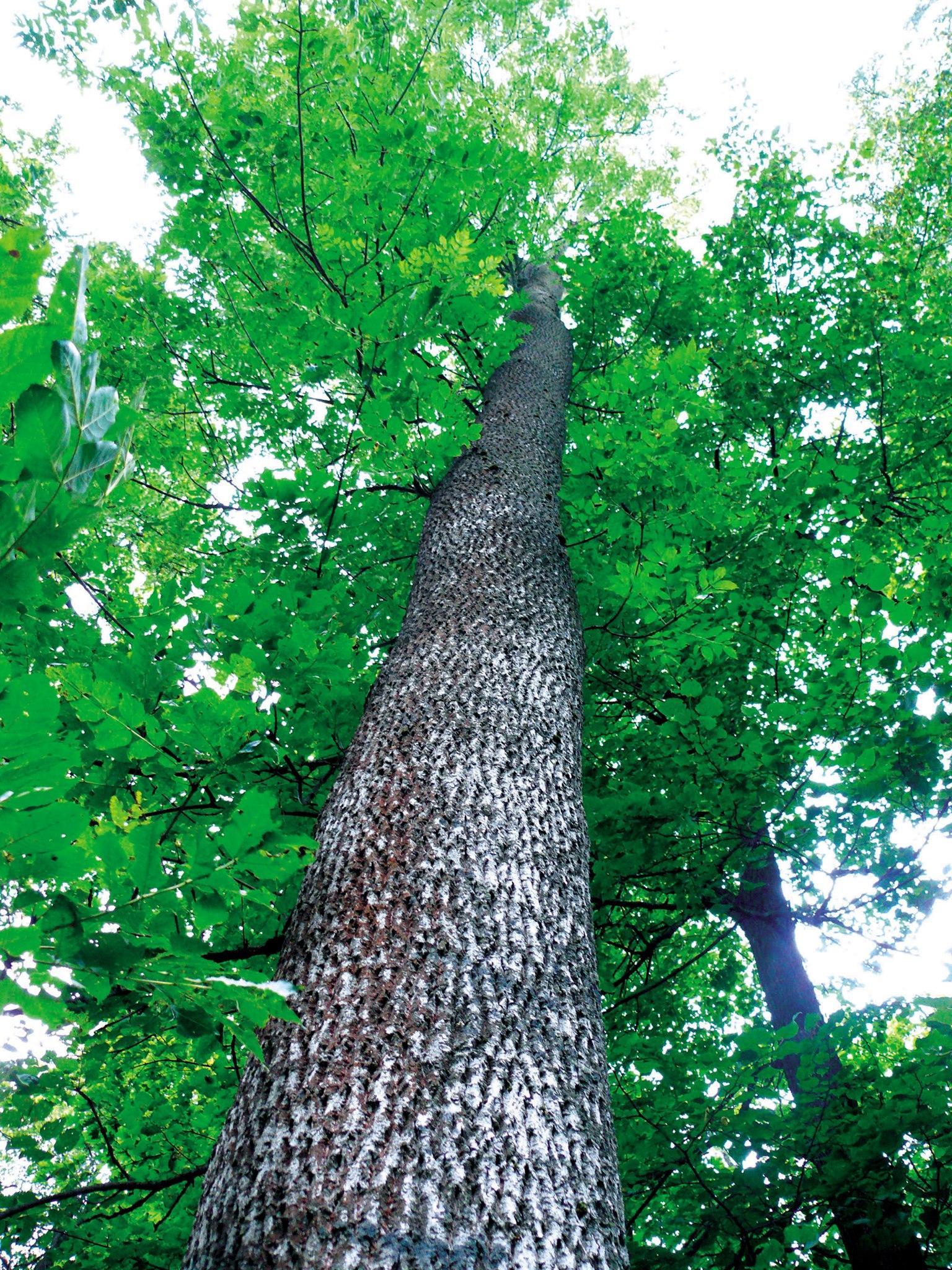 На Вінниччині висадили понад 5 мільйонів дерев (Фото)